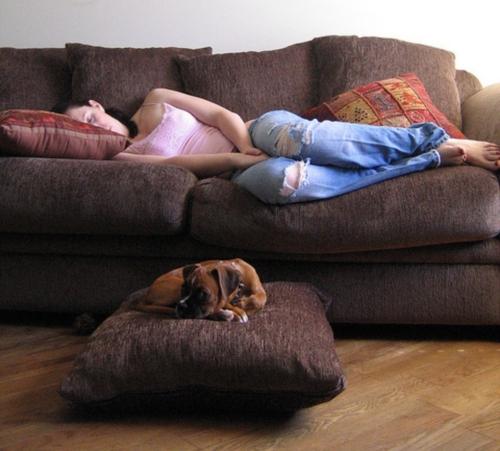 Спать на диване в чьей-нибудь гостиной.jpg