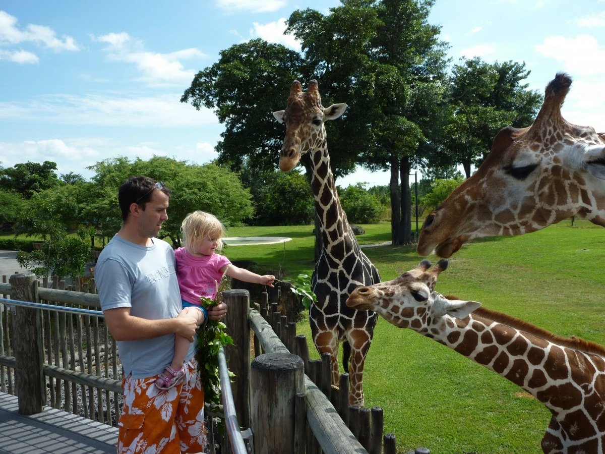 Зоопарк Майами прекрасно подойдет для семейного отдыха.jpg