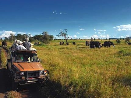 Сафари в Замбии.jpg