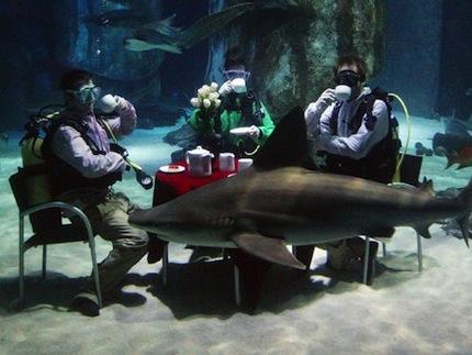 Shark Reef Encounter.jpg