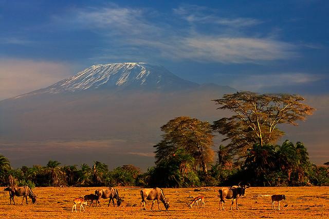 Природа Кении.jpg