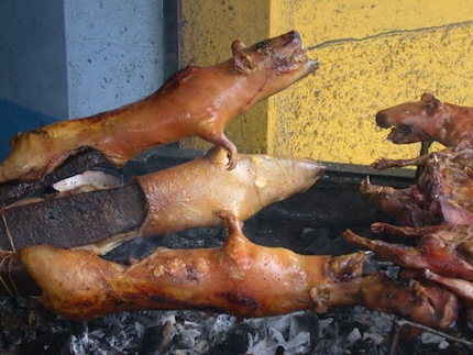 Жареная морская свинка.jpg