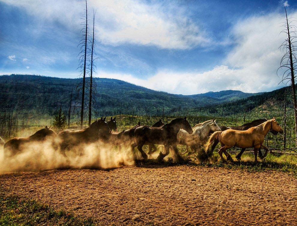 Табун диких лошадей.jpg